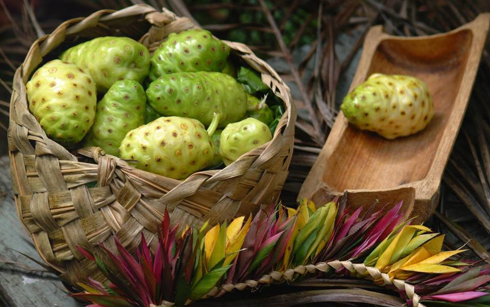 A selection of noni fruits