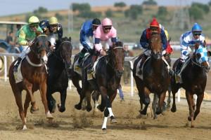 Horse race Hipodromo de Mijas