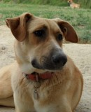 A Happy Story; Emma Arrives in Holland to a New Family !