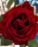 "Celebrate St Valentines Day - ""Its Wonderful"" by Roberto Danova & Angelo Camassa"