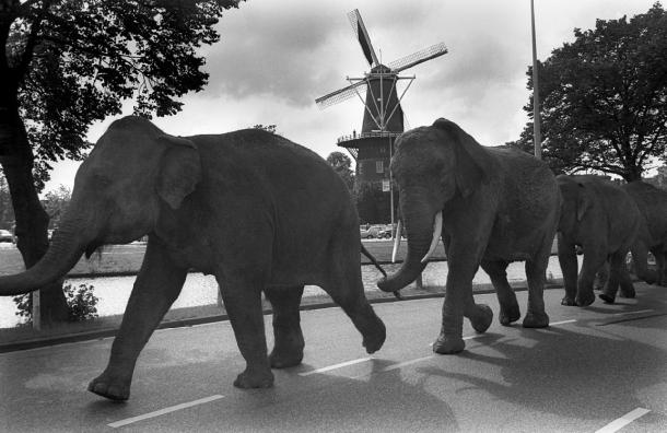 Fred Rohde - Elephant Parade