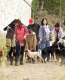 Redline Company designs 2015 calendar for �Triple A� animal charity