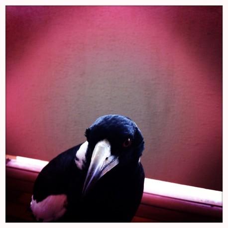 Wanda- 6, Magpie Mum