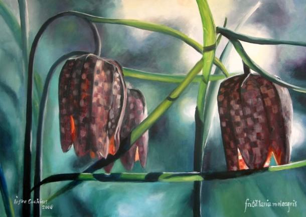 iefke - MB 10, fritilaria meleagris